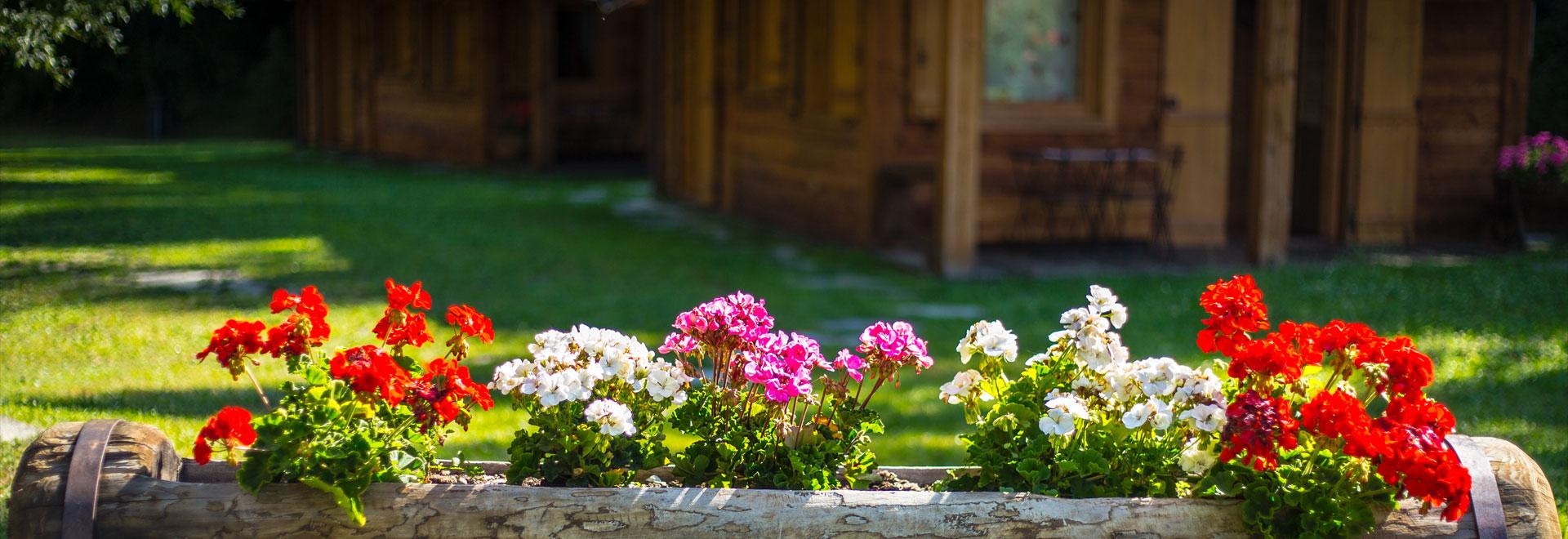Campeggio - dettaglio fiori